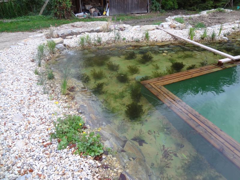 Teichbau im raum mistelbach wasseraufbereitung for Schwimmteich natur